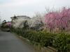 Chiyoume03
